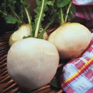 Turnip Snowball Seeds - 200 seeds / 3500 seeds